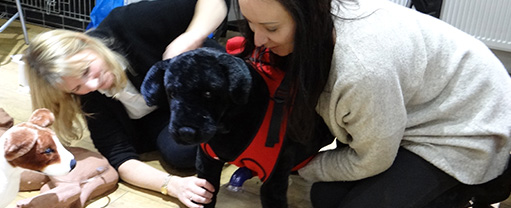 First Aid for Pets practical course