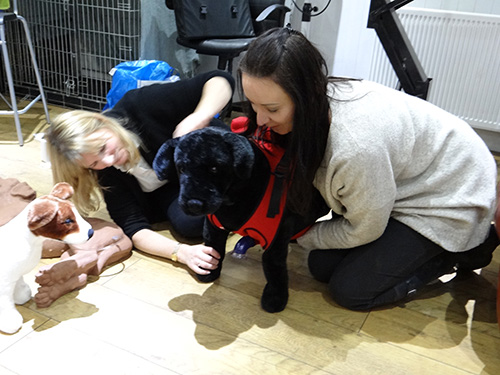 Dog first aid training course