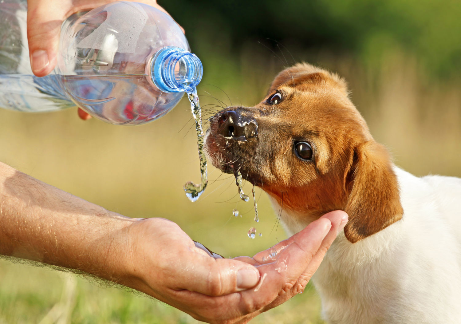 How to tell if your dog is dehydrated