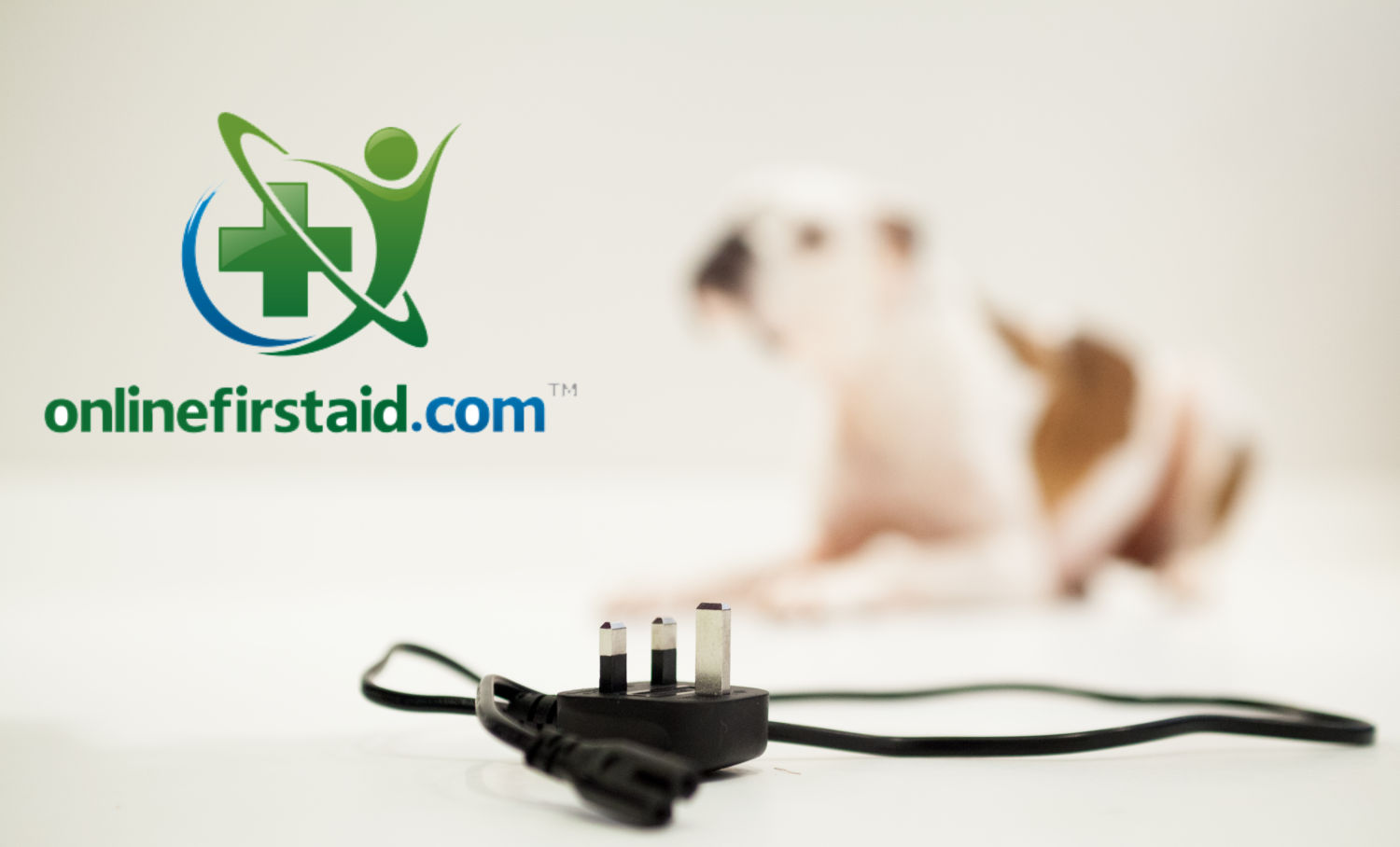 What to do if your Pet Receives an Electric Shock
