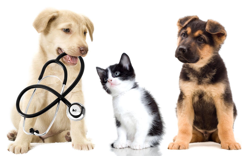 Can Heat Cause A Seizure In A Dog