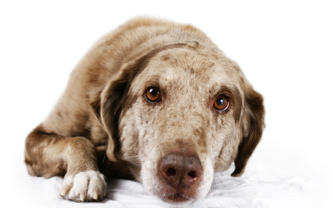 Behavioural Changes in Dogs