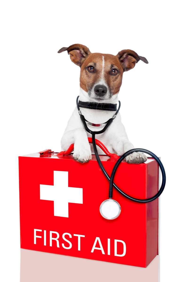 What you Need in your Dog First Aid Kit