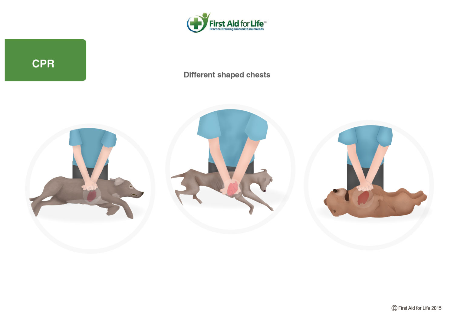 how to do cpr on dog