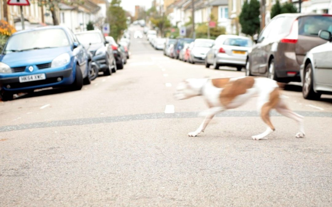 Road Traffic Accident – How to help your pet