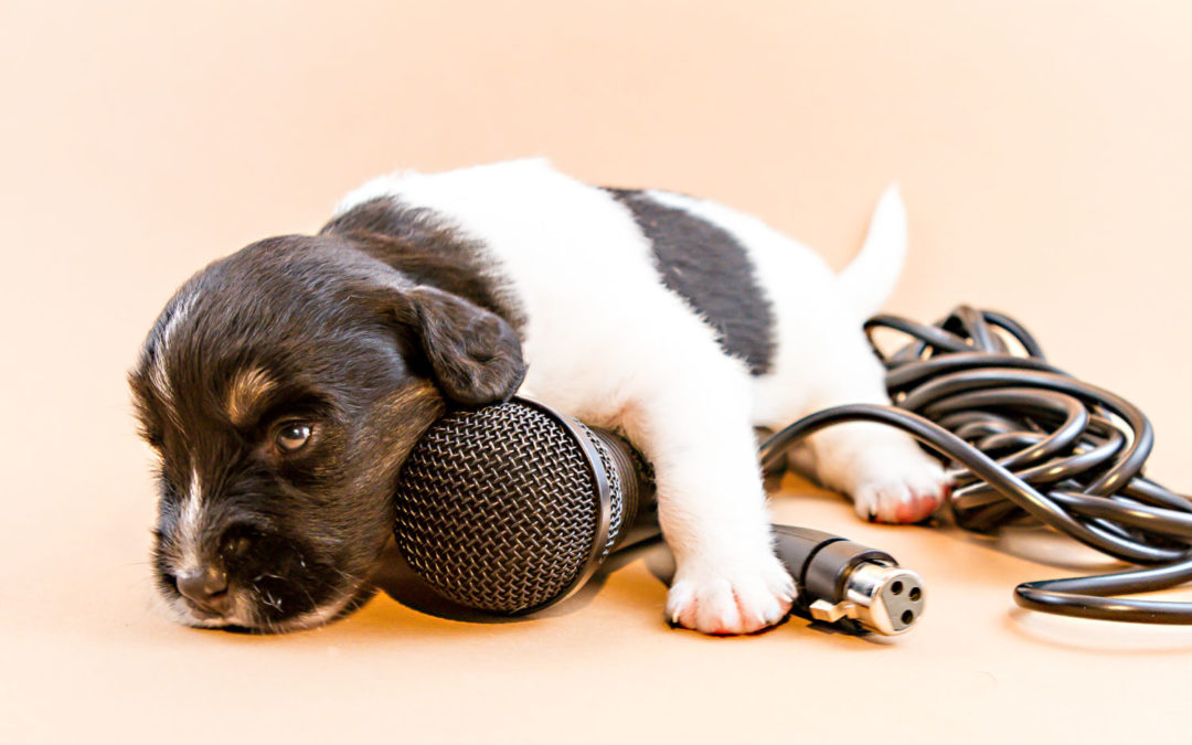 Top tips to keep your new puppy safe, happy and healthy
