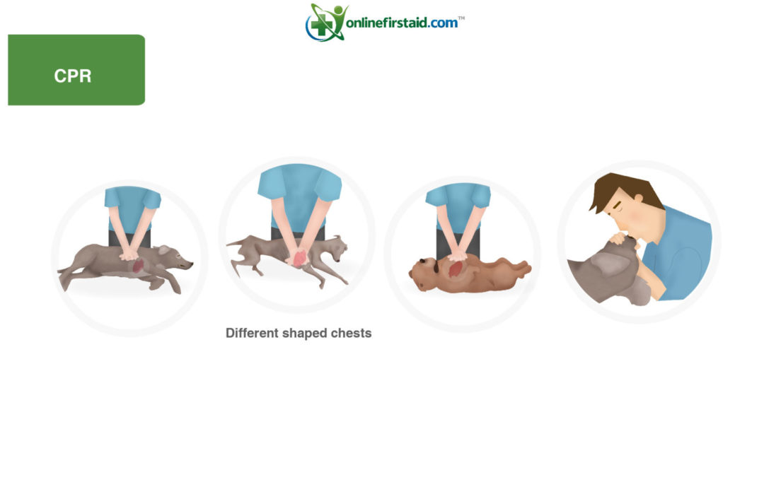 CPR for Dogs – How to save their life