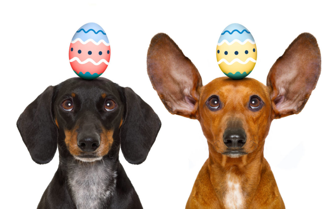 What to do if your dog has eaten chocolate, first aid for chocolate poisoning