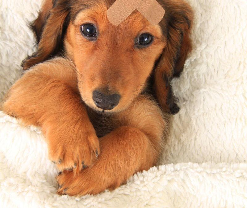 Why learning first aid for your dog is so important