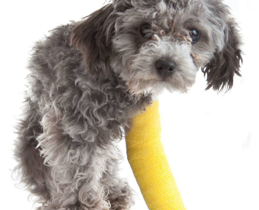 How to tell if your dog has broken a bone?