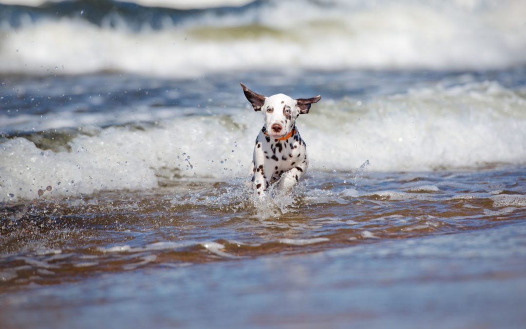 Doggy paddle without the danger – keeping your pet safe around water this summer