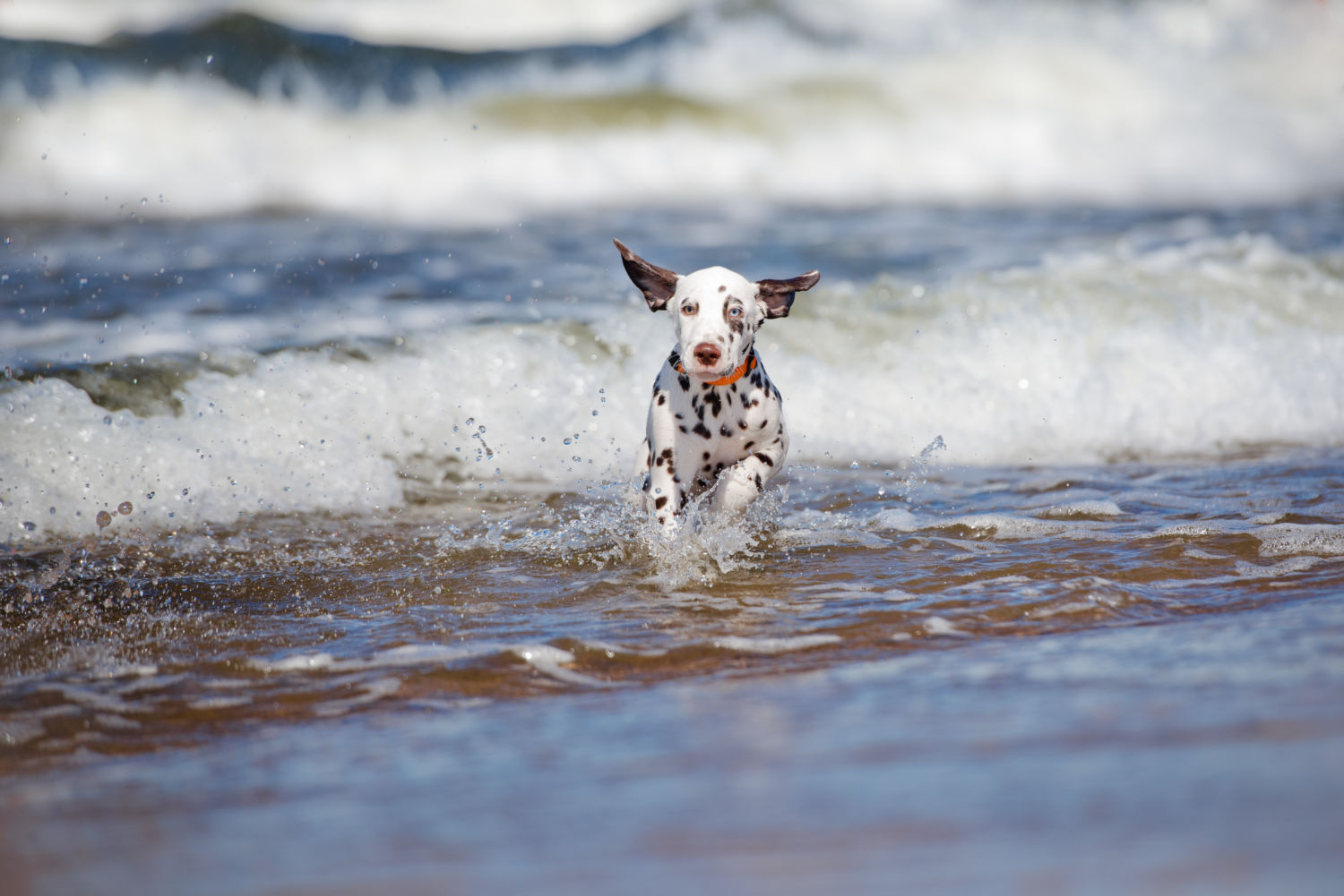 Doggy paddle without the danger – pet safety around water