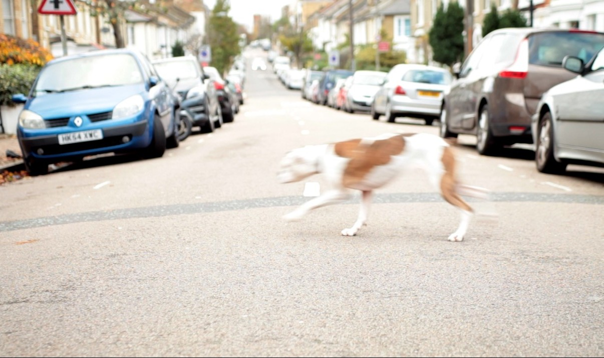What to do if your dog is hit by a car - know the first aid