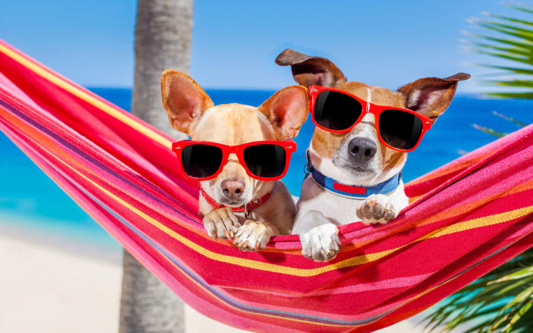 Travelling with your pet, top tips for safe and happy holidays