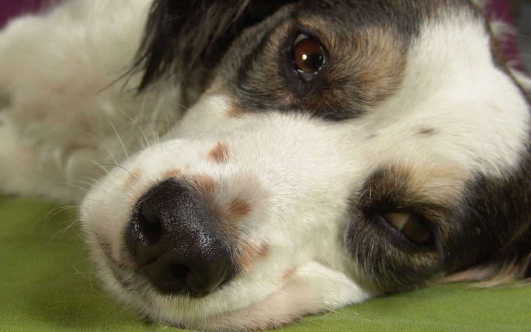 Carbon monoxide – poisoning in pets