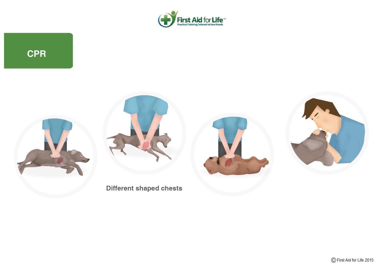 CPR dog
