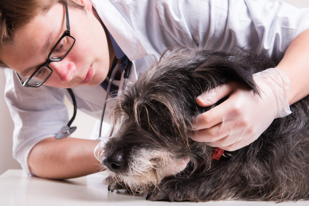 Fifteen occasions when you should urgently get your pet to the vet