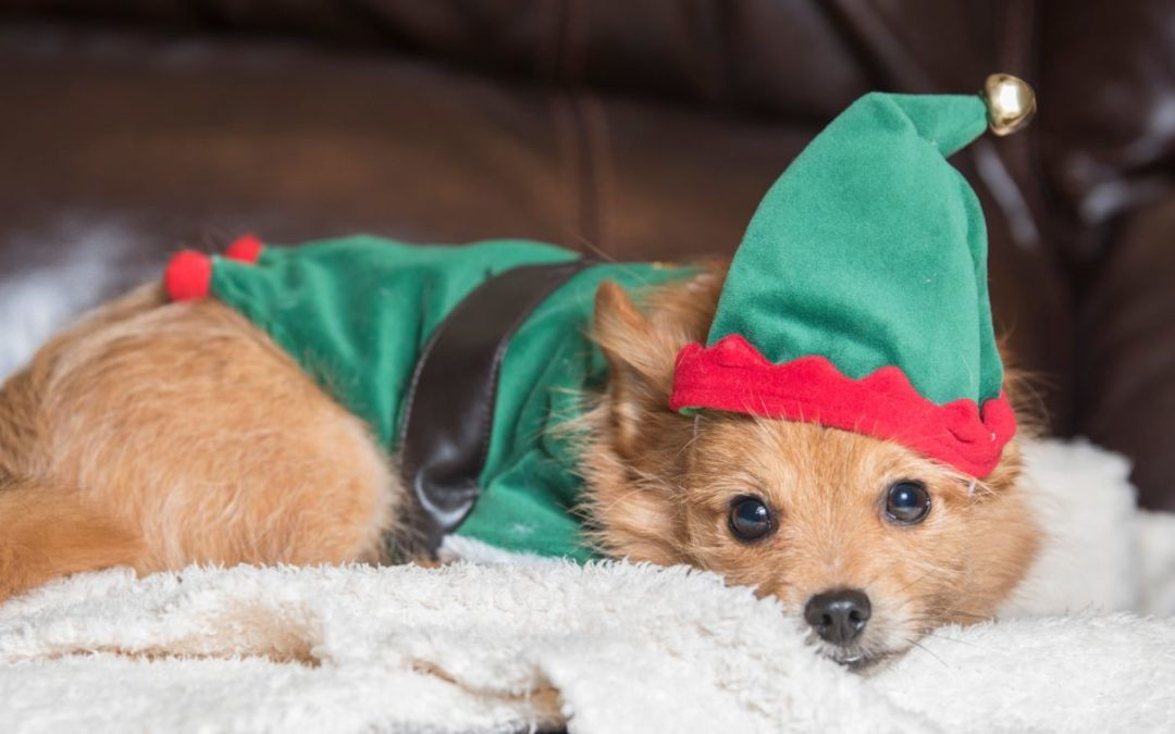How to have a pet-friendly Christmas