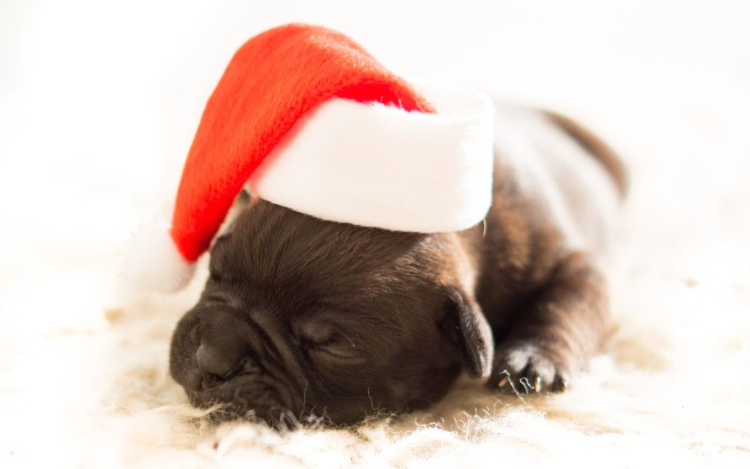 Food that could prove fatal to your pet this Christmas