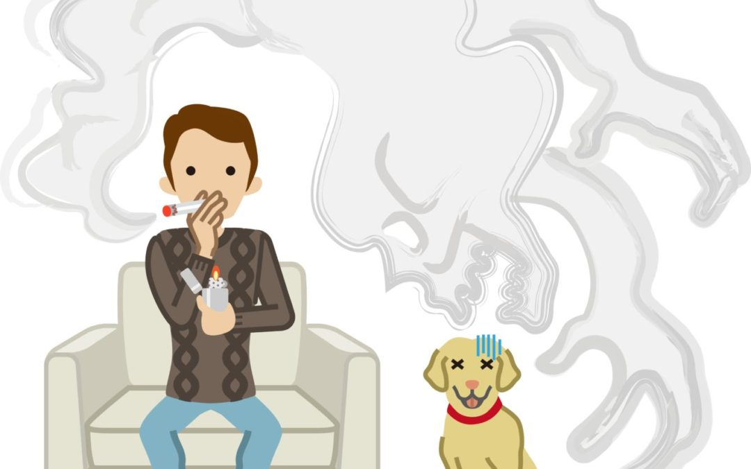 How smoking (or passive smoking) could seriously harm your pet