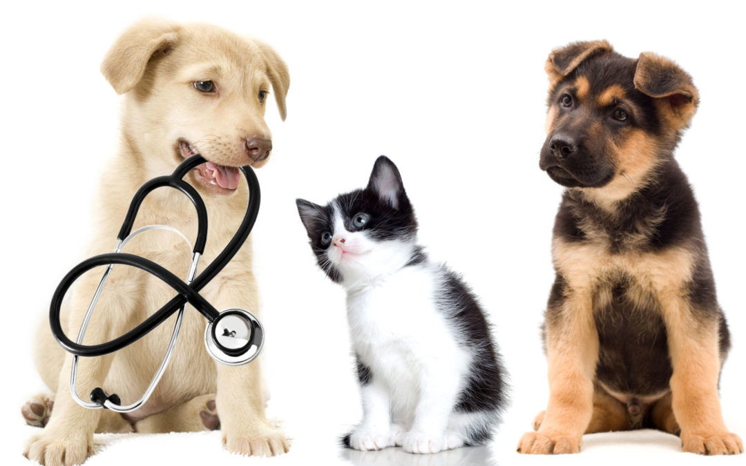 Dog seizures – how to help