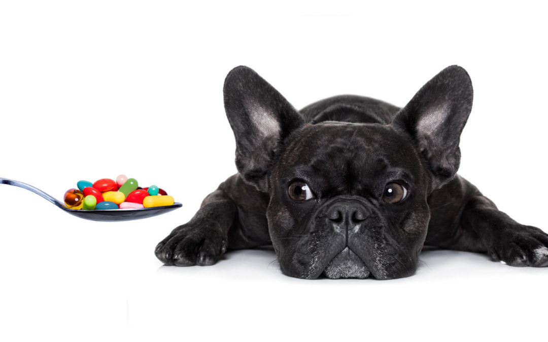 How owners can help make their pet's medicine easier to swallow
