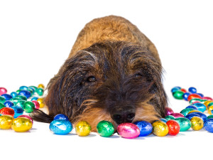 Not just chocolate: the Easter treats your dog mustn't consume