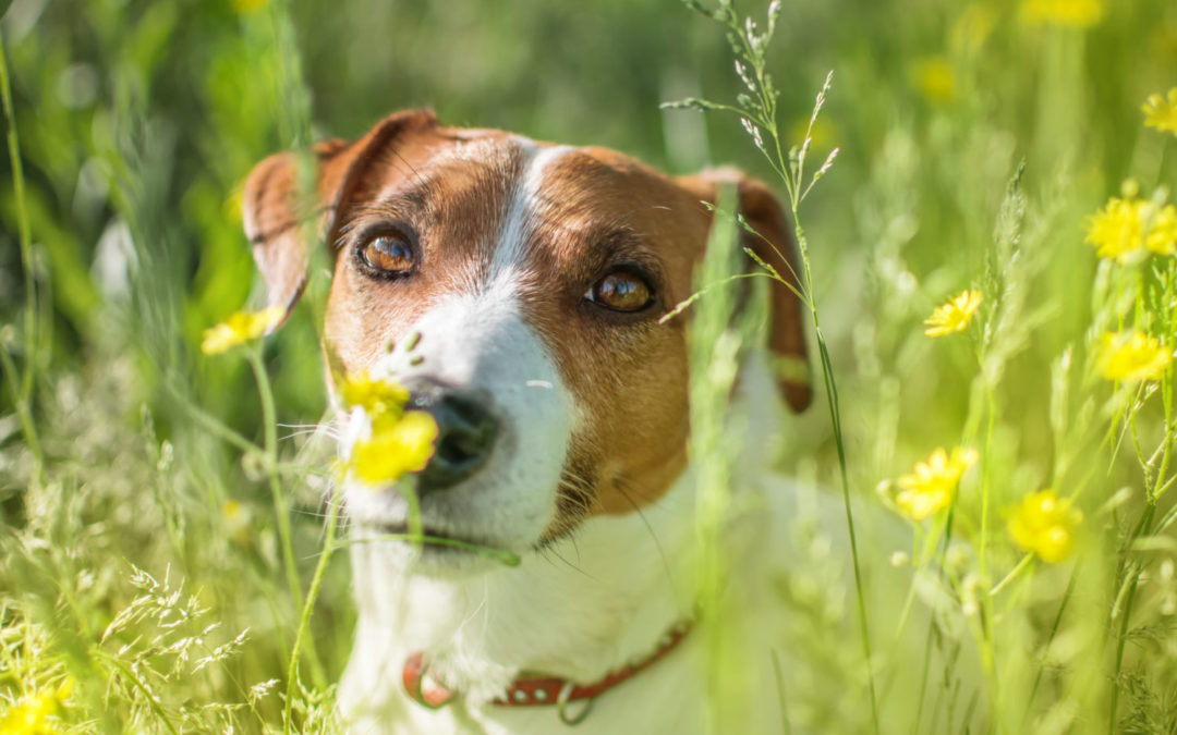 Staying safe from grass seed on summer dog walks