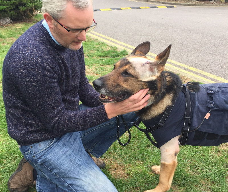 Finn's Law – Promising Stronger Protection for Service Animals