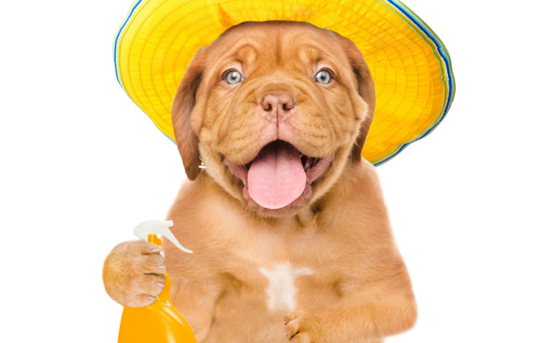 Summer Safety: how to keep your dog safe from the sun