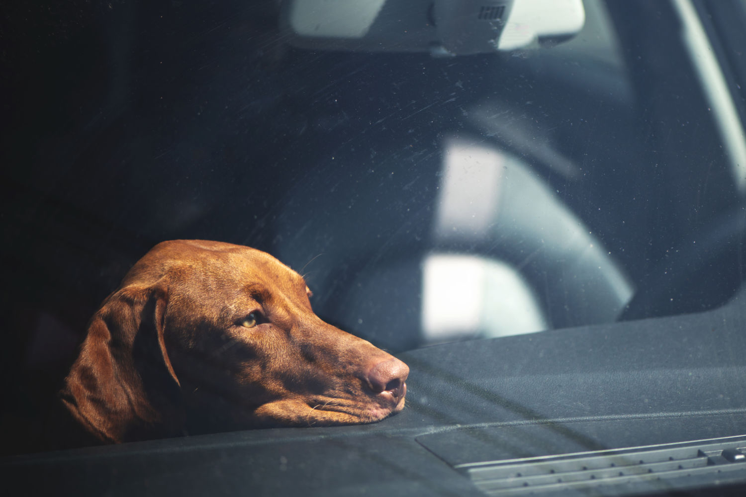 The deadly danger for dogs in hot cars you may not be aware of