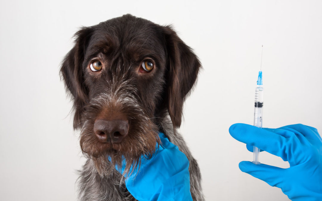 7 key vaccinations all dog owners should know about