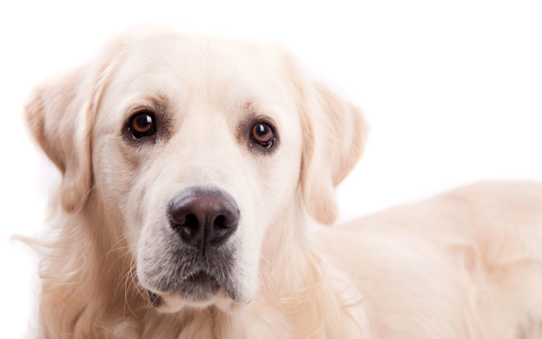 Seasonal Canine Illness: Get Prepared & Reduce the Risks for your Pet