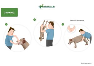 choking dog how to help