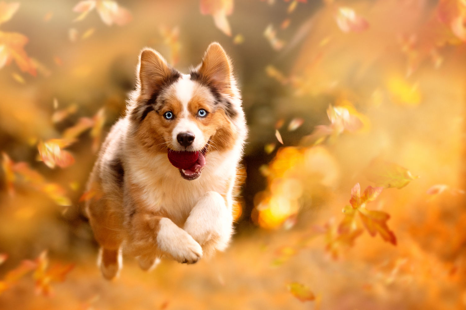 can acorns kill dogs first aid for pets