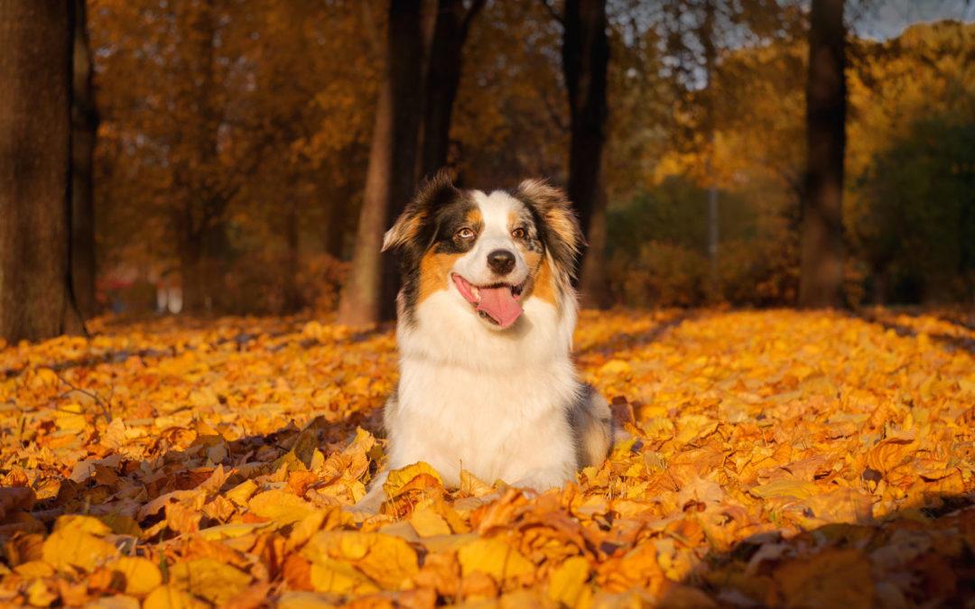 Can Acorns Kill Dogs? | Autumn Dangers