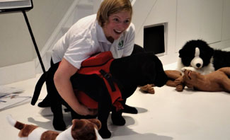 First Aid for Pets Practical Courses